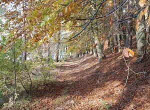 Zdjęcie okolicy - agroturystyka powiat pilski